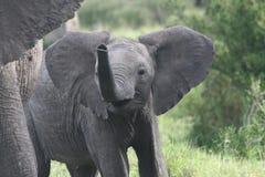 lycklig elefant Royaltyfri Fotografi