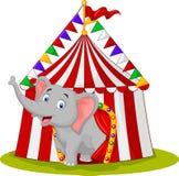 Lycklig elefant i cirkustältet Royaltyfri Bild