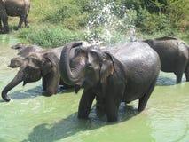 Lycklig elefantfamilj i vatten Arkivfoto