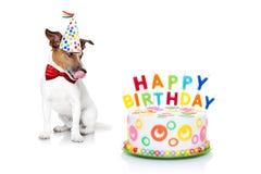 lycklig födelsedaghund royaltyfri foto