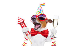 lycklig födelsedaghund Arkivbilder