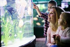 Lycklig familj som ser fiskbehållaren på akvariet royaltyfria bilder