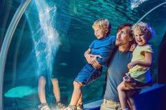 Lycklig familj som ser fisken i ett tunnelakvarium fotografering för bildbyråer