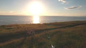 Lycklig familjspring på fältet, skytte från luften arkivfilmer