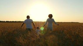Lycklig familjspring till och med ett vetefält i solen på solnedgången stock video