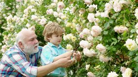( Lycklig farfar med hans sonson som arbetar i trädgården Jag älskar våra ögonblick i lager videofilmer