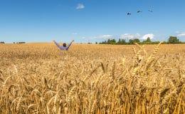 Lycklig farrmer bland rik plockningveteåker Arkivfoton