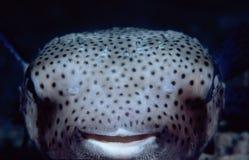 lycklig fisk Royaltyfri Bild