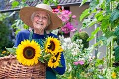 Lycklig gammal kvinna med korgar av nya solrosor Arkivfoton