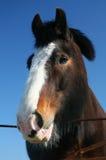 lycklig häst arkivbilder