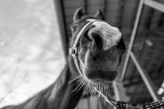 lycklig häst Royaltyfria Bilder