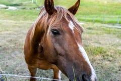 Lycklig häst som säger Hello royaltyfria foton