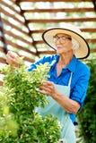 Lycklig hög kvinna som att bry sig för växter royaltyfria bilder