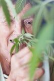 Lycklig hög kvinna som luktar cannabisväxten fotografering för bildbyråer