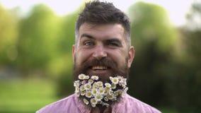 Lycklig hipster med mycket sm? vita blommor i hans l?nga sk?gg Le mannen som tycker om varm solig dag p? gr?n ?ng, v?r stock video