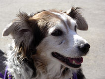 lycklig hund Fotografering för Bildbyråer