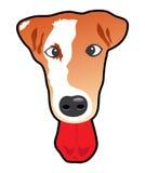 lycklig hund Arkivbild
