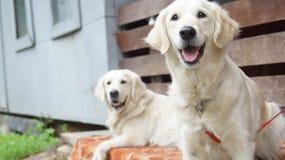lycklig hund Royaltyfria Foton