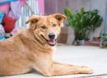 Lycklig hund Royaltyfri Fotografi
