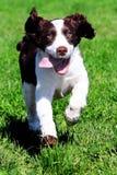lycklig hund Arkivfoto