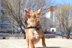 lycklig hund Royaltyfria Bilder