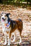Lycklig hund för mode royaltyfri fotografi