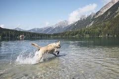 Lycklig hund i berg Arkivfoto