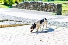 Lycklig hund i parkera Royaltyfria Bilder