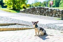 Lycklig hund i parkera Royaltyfri Fotografi