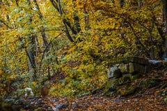 Lycklig hund i skogen Arkivbilder