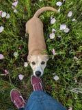 lycklig hund royaltyfri foto