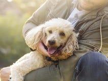 Lycklig hund och hans ägare Royaltyfria Bilder