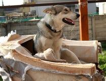 Lycklig hund och sko Royaltyfria Foton