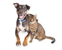 Lycklig hund och Tabby Cat Together Over White Arkivfoto