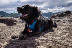 Lycklig hund på en vandring Arkivbilder