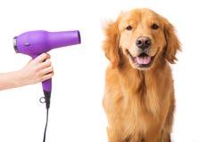 Lycklig hund på groomeren Royaltyfri Foto