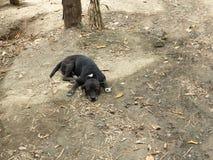 Lycklig hund på jordningen fotografering för bildbyråer