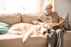 Lycklig hund på soffan med den äldre damen royaltyfria bilder