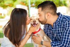 Lycklig hund som får massor av kyssar arkivbild