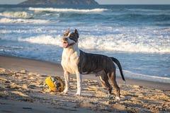 Lycklig hund som ser himlen royaltyfri fotografi