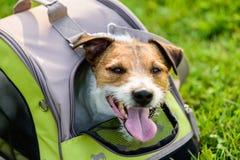 Lycklig hund som ser ut ur ingreppsfönster av handelsresandehusdjurbärkassen Royaltyfria Bilder