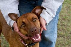 Lycklig hundförälskelse Royaltyfria Bilder