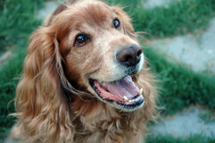 lycklig hundfreddie Arkivbilder