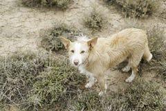 Lycklig hundhund arkivfoto