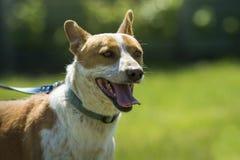 Lycklig hundhund i gräset royaltyfri bild