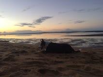 Lycklig hundsolnedgång för strand Arkivbild