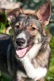 Lycklig hundstående i sommar fotografering för bildbyråer