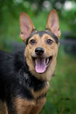 Lycklig hundstående i sommar royaltyfri bild
