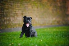 Lycklig hundTerriersitting royaltyfri foto