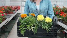 Lycklig industriell växthusarbetare Carry Boxes Full av blommor Le och lycklig kvinna med blommor henne som växer arkivfilmer
